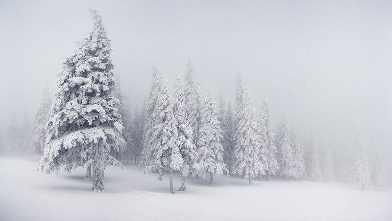 карпаты, горы, снег, зима О настоящей суровой зимеphoto preview