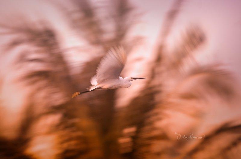 природа, животные, птицы, вьетнам, остров фукок Краски уходящего дняphoto preview