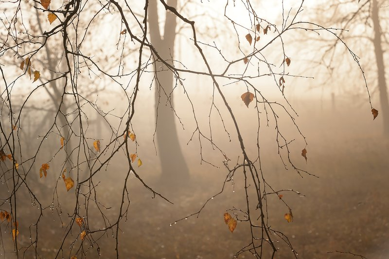 рассвет,туман,россия,осень \