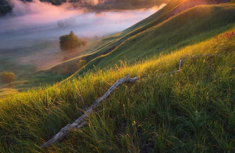 утро, лето, пейзаж, свет, холмы, долина, туман, деревья, morning, fog, misty, light, summer, colors, trees, valley, landscape, misty феерия светаphoto preview