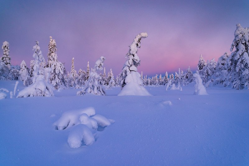 финляндия, лапландия В лесу родилась елочкаphoto preview