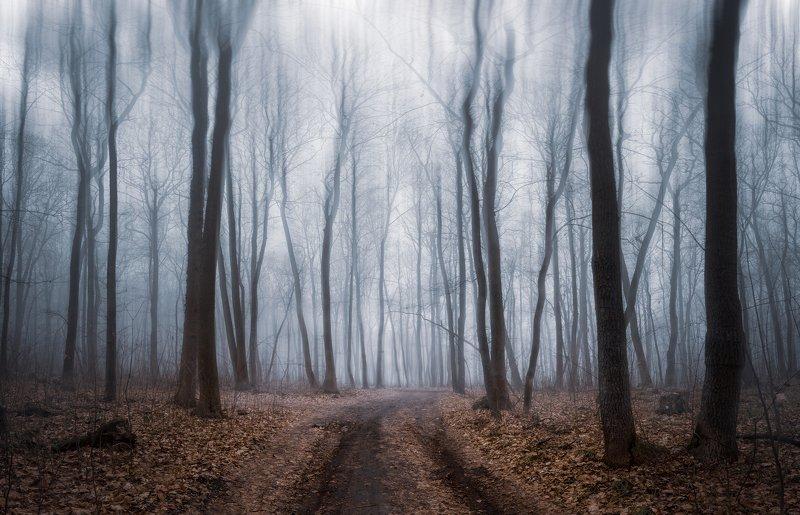 forest fog mist winter trees landscape outdoors road December mistphoto preview