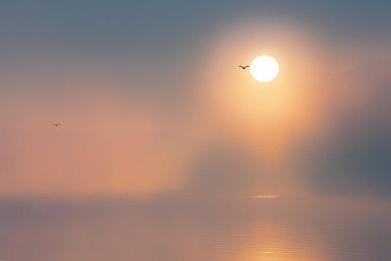 река, утро. туманы, птицы Туманы Свислочиphoto preview