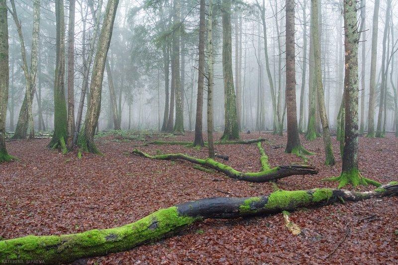 природа, лес, пейзаж, туман Утро туманноеphoto preview
