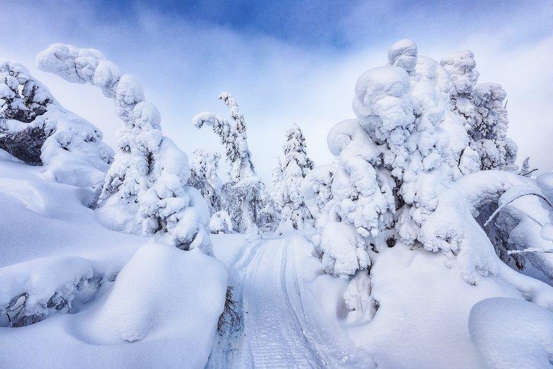 зима, снег, ели, кандалакша Куда ушел снегphoto preview