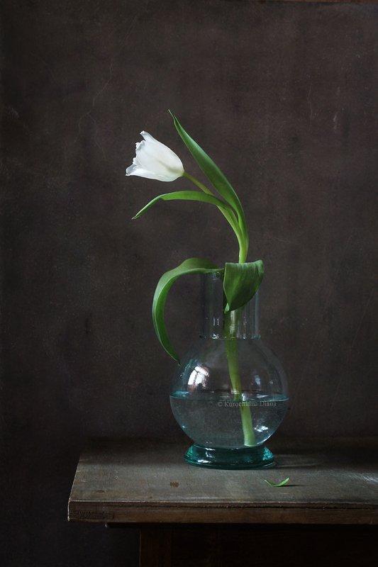 натюрморт, цветы, белый, тюльпан Белый тюльпанphoto preview