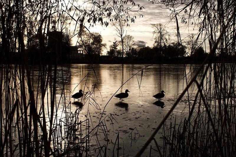 архитектура, санкт-петербург, петербург, город, вечер, зима, пейзаж, петергоф, пруд, птицы На прудуphoto preview