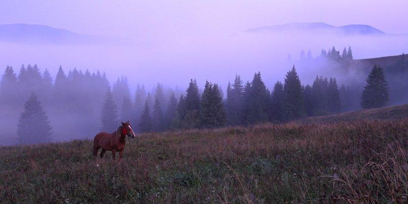горы, карпаты, лошадь, туман, утро Ёжик в тумане)photo preview