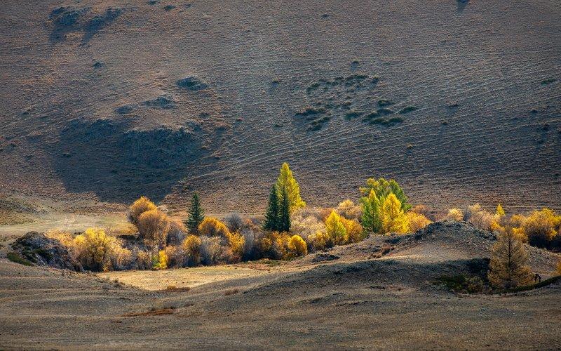 горы, алтай, горный алтай, ник васильев, красота, утро, кусты, деревья, свет, оазис, каратюргун Алтайский оазис.photo preview