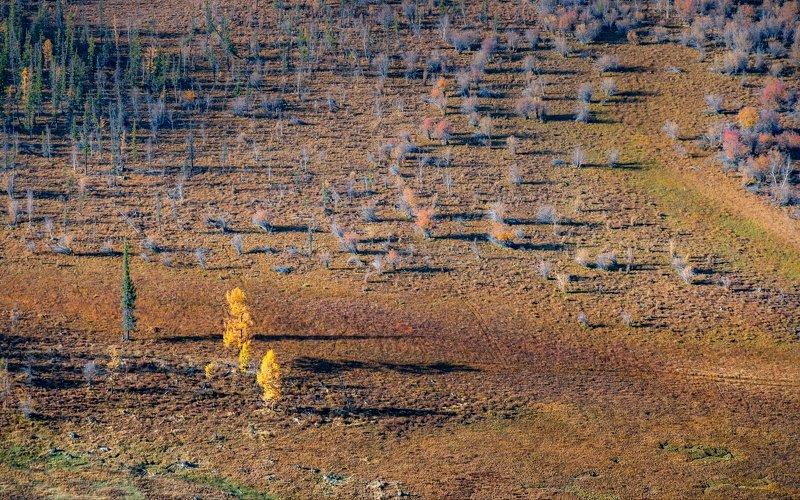 горы, алтай, горный алтай, ник васильев, красота, утро, кусты, деревья, свет, Пушистики.photo preview