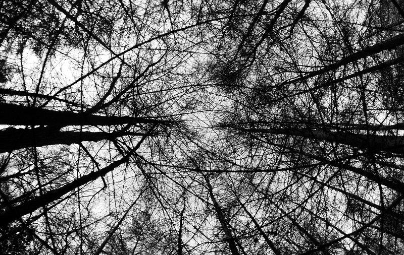 чб, монохром, лес паутинаphoto preview