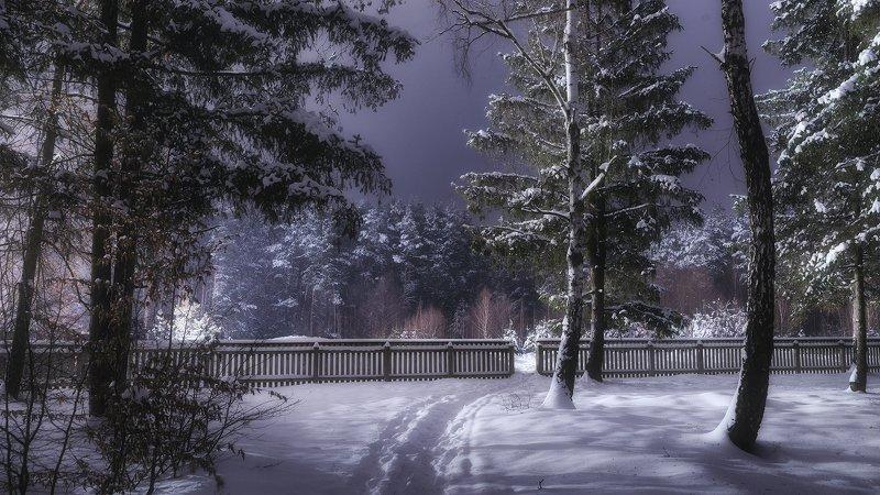 украина, коростышев, природа, лес, тропинка, свобода, полесье, зима, снег, метель, волшебство, тишина, уединение, счастье, жизнь, воздух, чистый, вдохновение, березки, деревья, просторы, фотограф, чорный, \