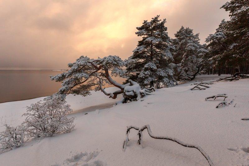 карелия,зима,сосны,красота \