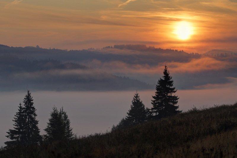 горы, карпаты, туман, утро, рассвет, солнце Утроphoto preview