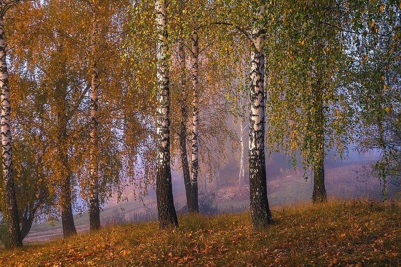 Осень.Утро.photo preview