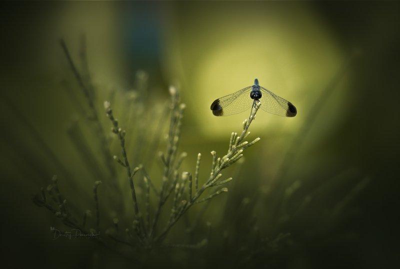 природа, животные, птицы, насекомые,вьетнам, остров фукок Силуэтыphoto preview
