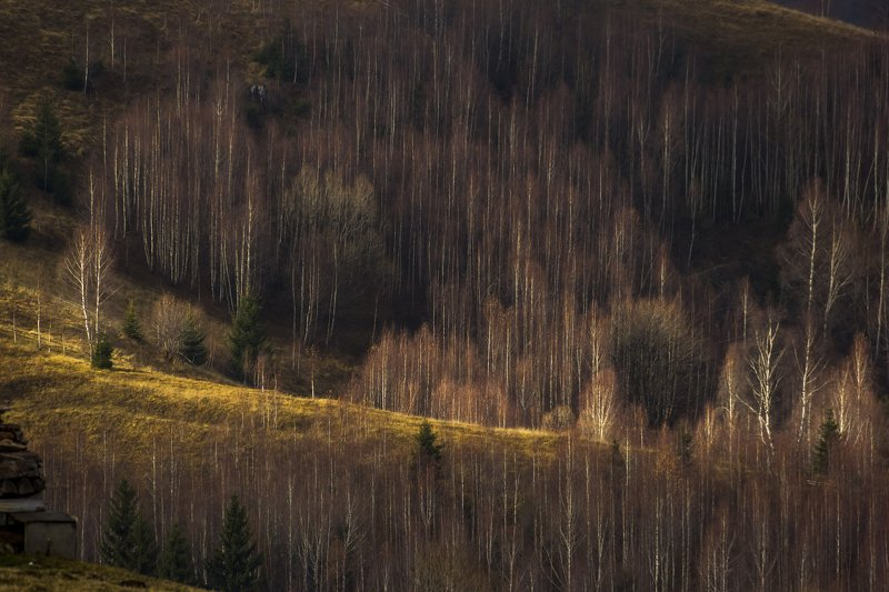 trees landscape photography  treesphoto preview