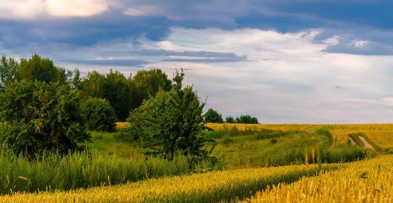 nevant60, пейзаж, красота, природа Родные просторыphoto preview