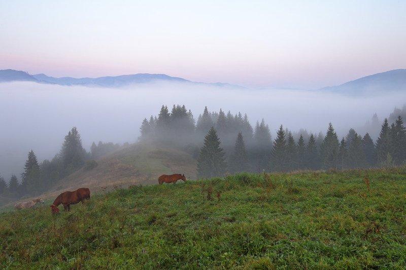 горы карпаты лошади кони туман утро долина В долинеphoto preview