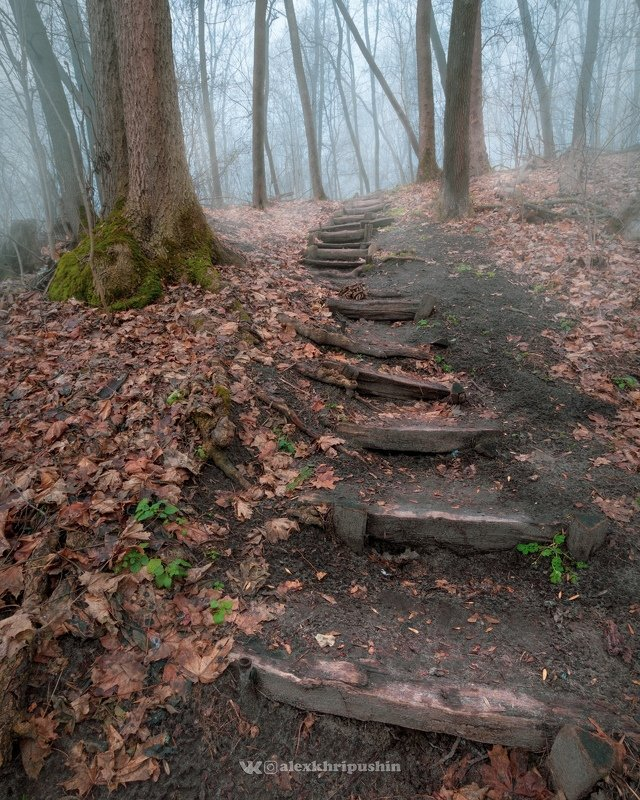 forest fog mist outdoors nopeople landscape winter trees path nature wideangle Stairs to the mistphoto preview