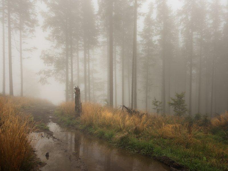 Leśny szlakphoto preview