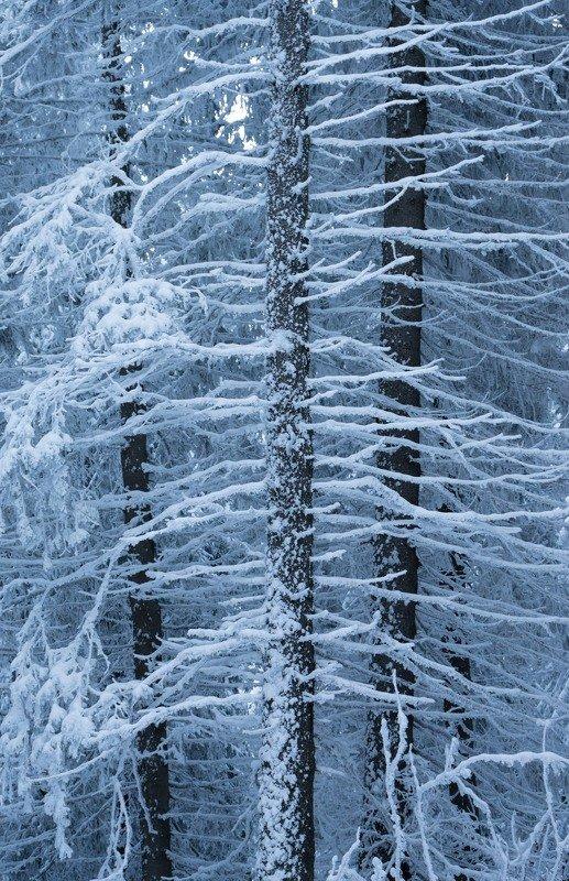 Зимноphoto preview