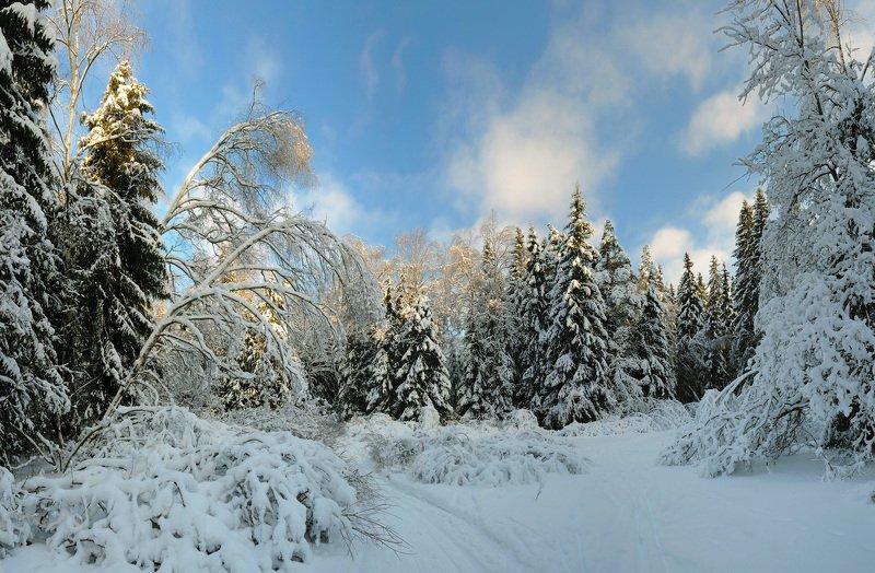 зима, снег, зимний лес Прошлогодний снегphoto preview