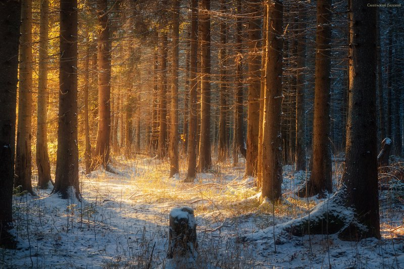 зима, лес, ель, снег, закат, вечер, мороз, солнце Волшебный светphoto preview