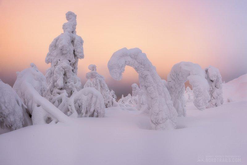 кольский, кольский полуостров, кандалакша, зима, winter, snow, north Новогодняя сказкаphoto preview