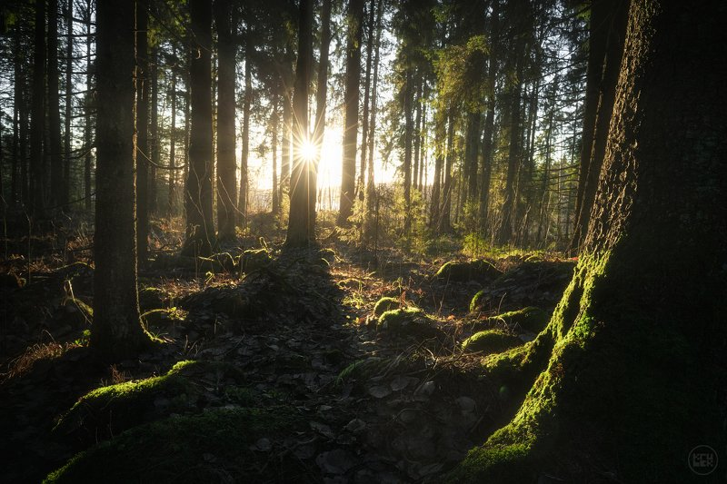 карелия, лес, кирьявалахти, Побережье Кирьявалахтиphoto preview