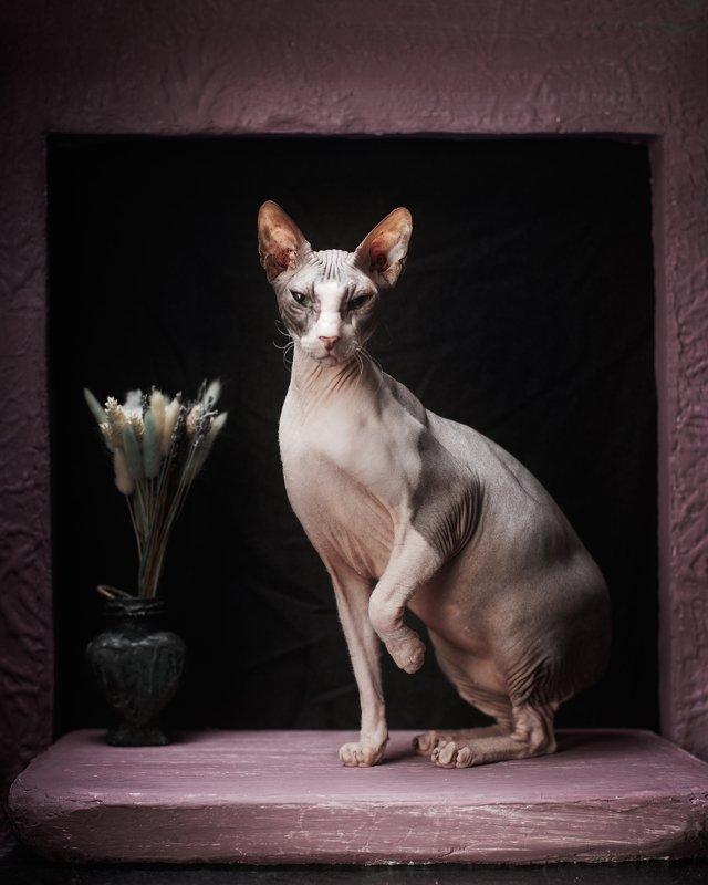 #spinks #stillife #igorkryukov #kerch #fashioncats Sphinxes in a still life (Сфинксы в натюрморте)photo preview