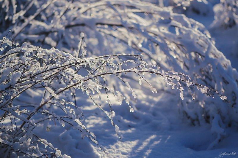 зима, снег, солнце, блики, ветки, боке Новогодние подарки природыphoto preview