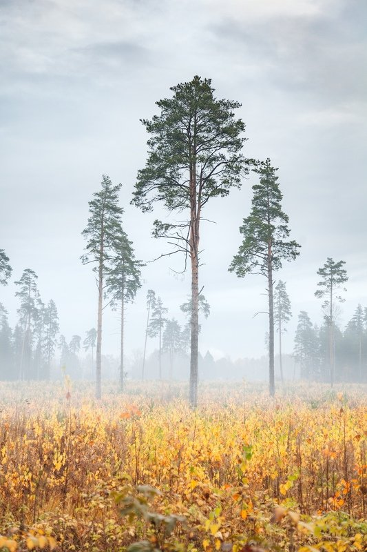 Подмосковная осеньphoto preview