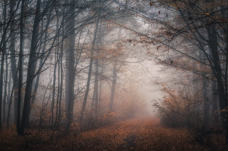 Foggy woodlandphoto preview