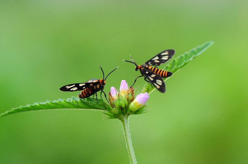 #macro, #nature, #animals, #green, #forest two Butterfly orange in gardenphoto preview