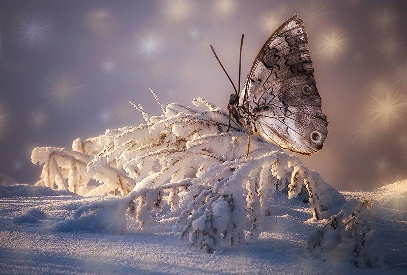 бабочка, новый год Новогодняя бабочка.photo preview