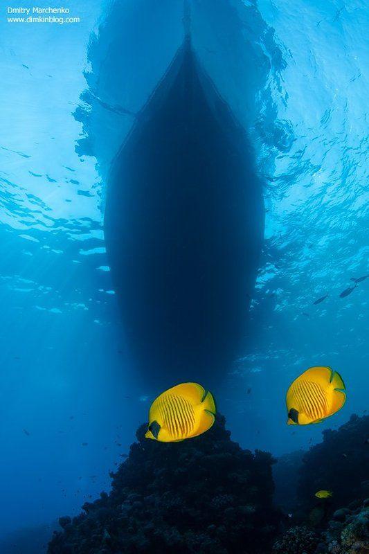 рыбы бабочки, butterfly fish, underwater ***photo preview