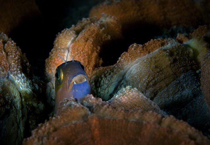 индонезия, комодо Инопланетянинphoto preview