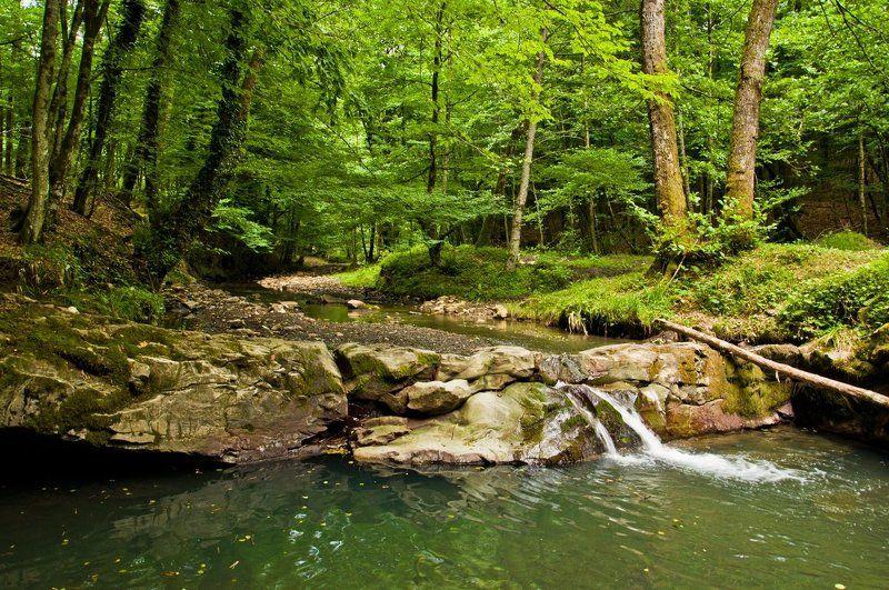 лето, лес, река, змейка, сочи Лето. Река и лесphoto preview