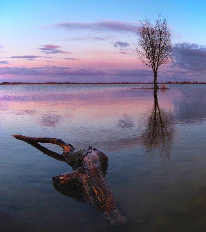 вода, дерево, отражение, вечер На прудуphoto preview