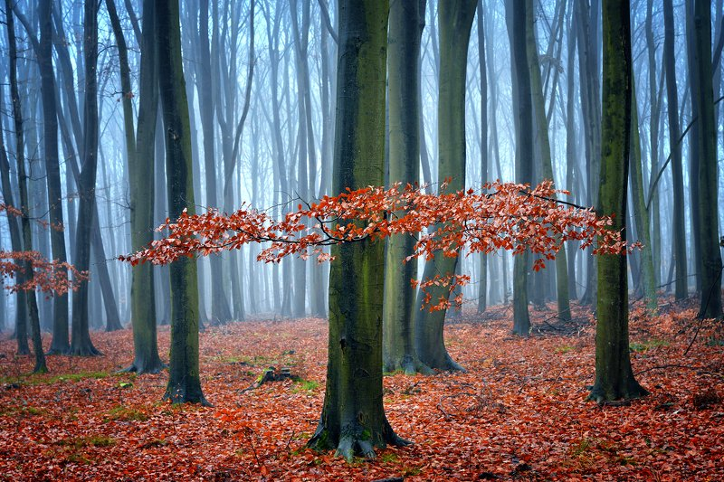 осенний лес forest autumn magic mist foggy red dranikowski tree leaf poland trees осенний лесphoto preview