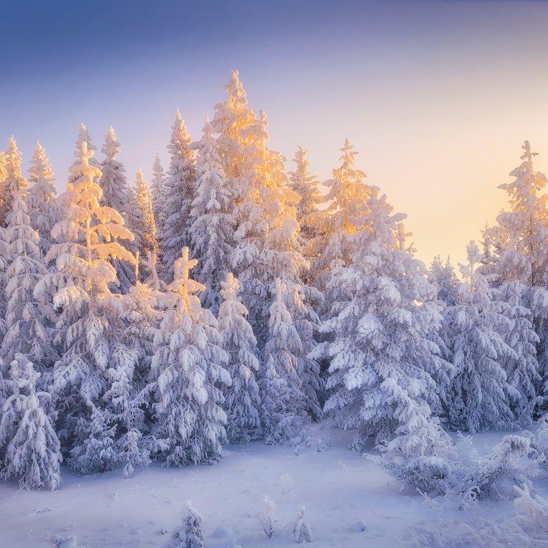 зима, куржак, лес В зимнем нарядеphoto preview