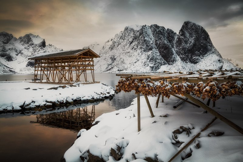 Drying fish in the Lofoten.photo preview