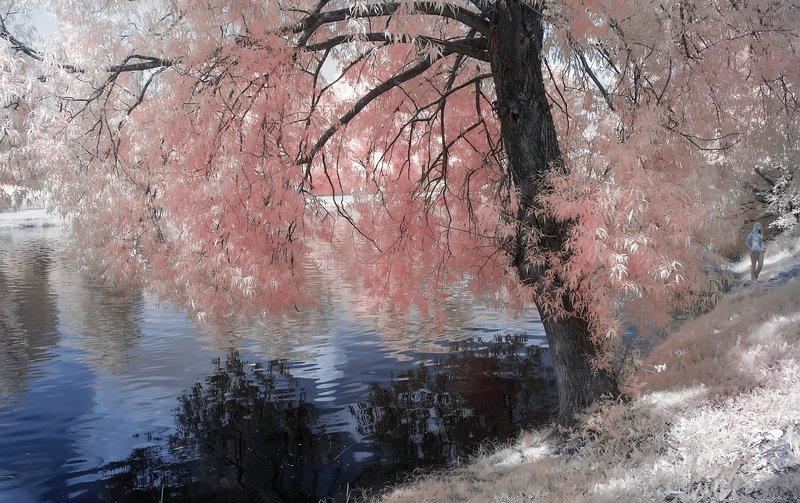 лето, река, девушка Нежность.photo preview