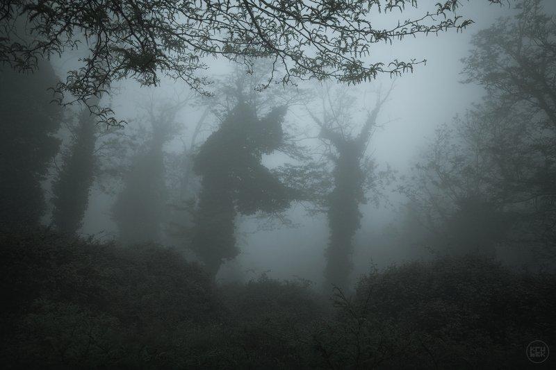 черногория, туман, лес Танцы в туманеphoto preview