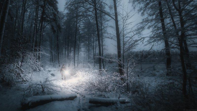 украина, коростышев, природа, лес, полесье, зима, тропа, человек, свет, сумерки, вера, молчание, снегопад, озеро, следы, силуэт, тишина, уединение, счастье, жизнь, воздух, чистый, вдохновение,  деревья, фотограф, чорный, Безмолвие ночиphoto preview
