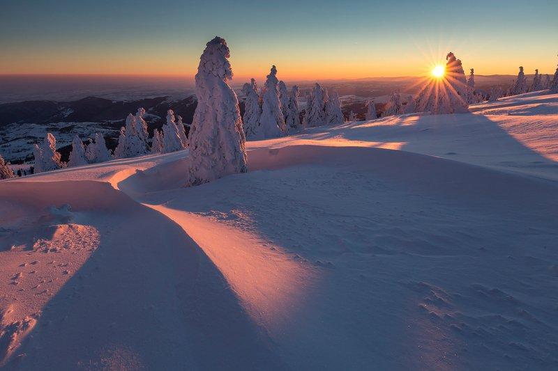 mountain, winer, landscape, travel, nature, romania, colors, apuseni, trees, snow, cold, sunrise Cold Morningphoto preview
