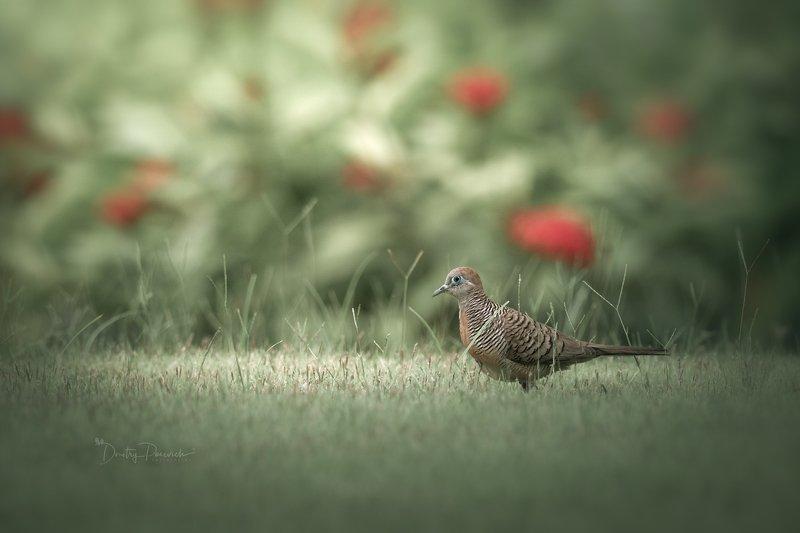 природа, животные, птицы, вьетнам, остров фукок На лужайкеphoto preview