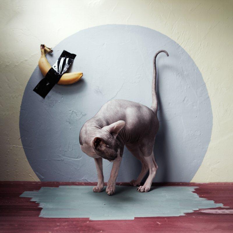 #искусство #сфинксы в натюрморте #кот #банан_маурицио Sphinx and artphoto preview