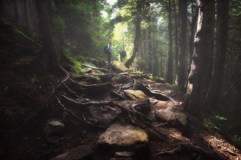 горы, карпаты, тропа, лес, природа Горными тропамиphoto preview